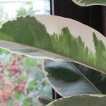 My dear plant